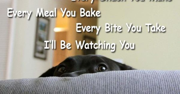 Animal Humor - Watching you, snack, dog