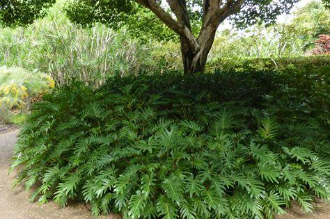 Full sun bushes and shrubs ground cover plants for Full sun landscaping plants