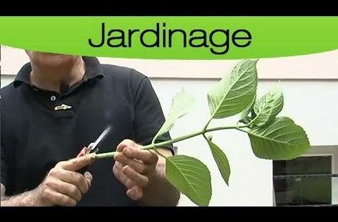 Bouturer un hortensia garden pinterest pots simple et youtubers - Comment bouturer un hortensia ...