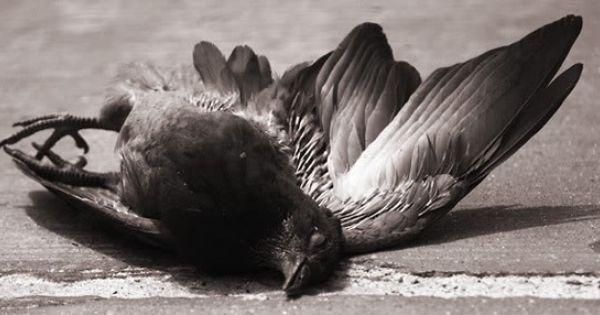 Really Bad Powerpoint Bird Animal Sketches Bird Photo