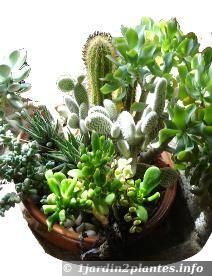 Plantes Grasses En Pot En Melange Avec Images Culture Des