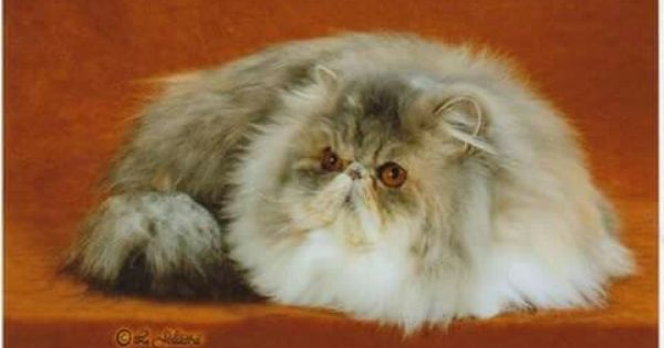 Pin Auf Persian Cats Sandy B Cattery