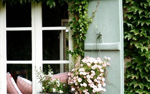 window. shutters. vines.