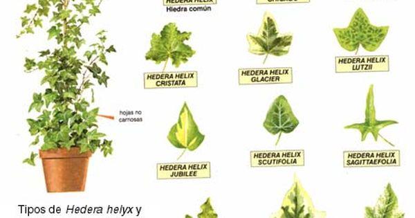 Dibujo de plantas medicinales con su nombre imagui - Clases de flores y sus nombres ...