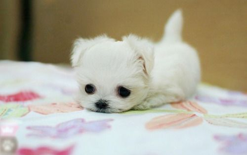 Sweet Little Puppy