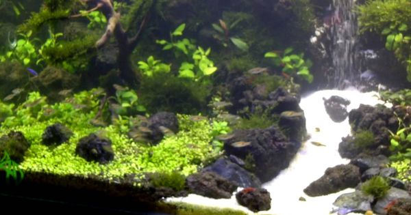 under water waterfall aquascape | Aquarium | Pinterest ...