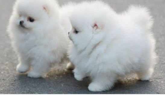 It's SOO fluffy Puppy Dogs multicityworldtravel.com We cover the world over 220