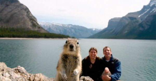 Squirrel photo bomb- this is so funny! It makes me laugh every