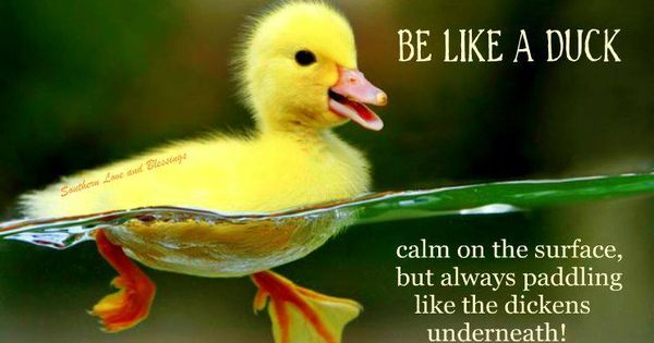 The Secret To Success In Life Is To Be Like A Duck