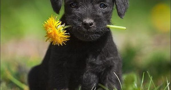 Best Little Black Dog ever