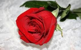 Flower Beautiful Red Roses Images Wallpaper Nature Flowers Beautiful Red Roses