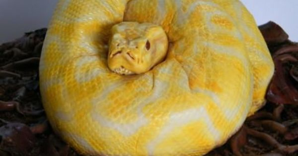 A snake cake