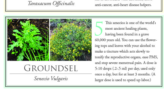 10 common weeds that can heal you. To make a tincture use