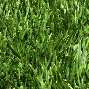 Harmony 500 Sq Ft Fescue Sod 1 Pallet Hh500f1 Fescue Sod Fescue Plants For Hanging Baskets