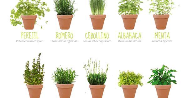 Taller las plantas arom ticas y el huerto ecol gico - Plantas aromaticas interior ...