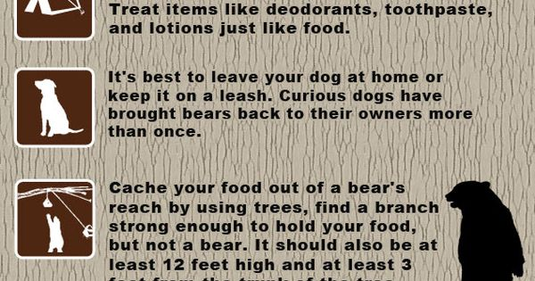 Bear Safety Tips - know the difference between black bears and grizzly