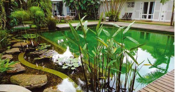 Piscinas ecol gicas garden pinterest for Piscinas ecologicas