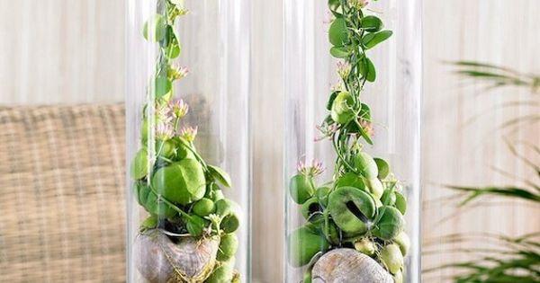 Arredare casa con i fiori vasi in vetro trasparente for Arredare con i fiori