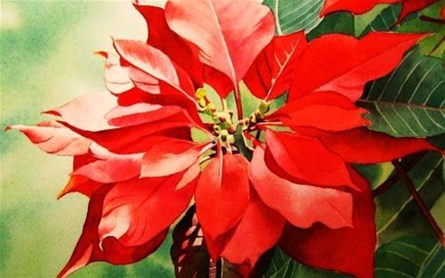Merry Christmas Original Fine Art For Sale C Jacqueline Gnott Christmas Watercolor Watercolor Flowers Flower Painting