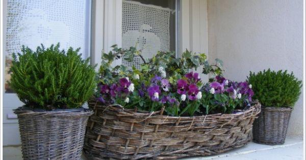 Jardiniere Automne Ton Blanc Pourpre Recherche Google