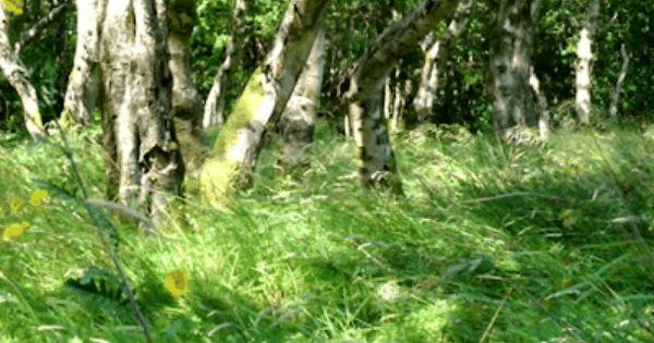 pagewoman source blacksmithseye 庭作りのアイデア 風景 自然