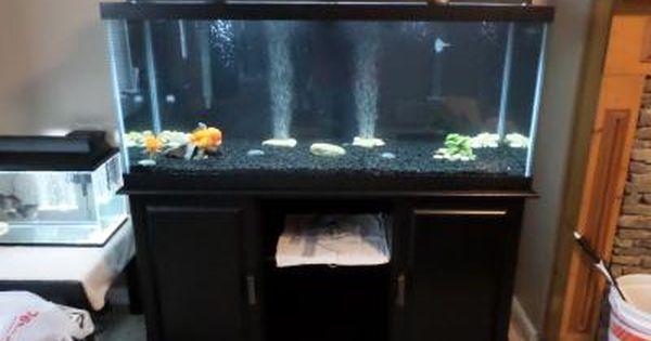 Pin On Turtle Tank