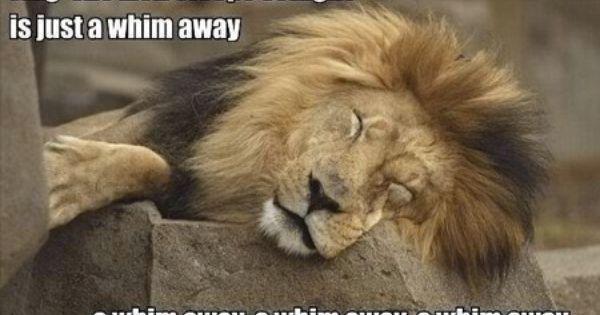 The Lion Sleeps Tonight - Lion King