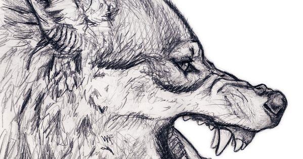 Wolf Snarl by silvercrossfox.deviantart.com on @deviantART amazing ...