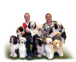 Contact Us Dogs Tibetan Terrier Terrier Puppies