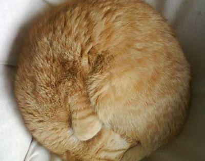 A cats life