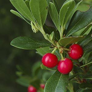 Plantas medicinales astringentes | Plantas medicinales, Plantas ...