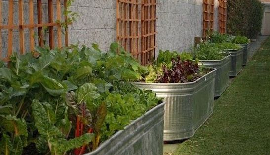 Raised garden beds have many advantages, ranging from saving wear and tear