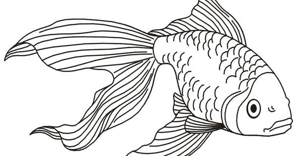 Coloring pages tropical fish Coloring Pages Pictures