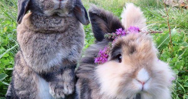 Pin Auf Bunny Pic