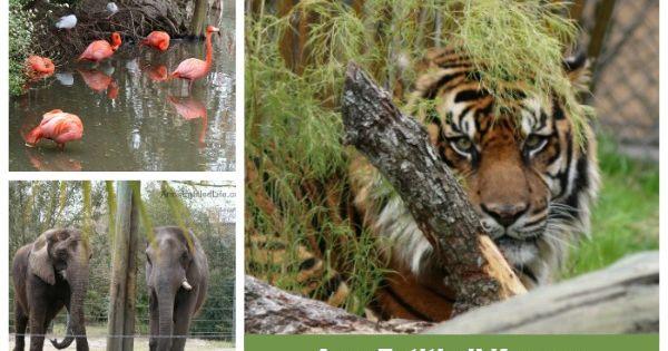 la zoo memorial day weekend