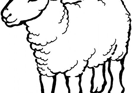 Sheep wwwsupercoloring PreSchool Activities