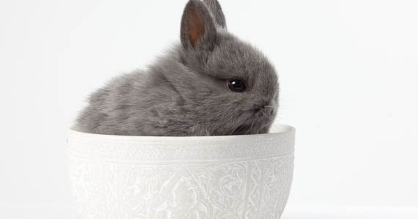 Bunny Rabbit Photo Nursery Art, Pet Portrait - 'Baby BUNNY in a