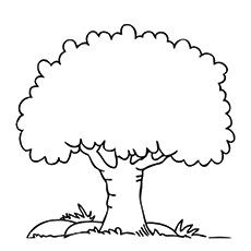 Top 25 Tree Coloring Pages For Your Little Ones Tree Coloring Page Coloring Pages Picture Tree