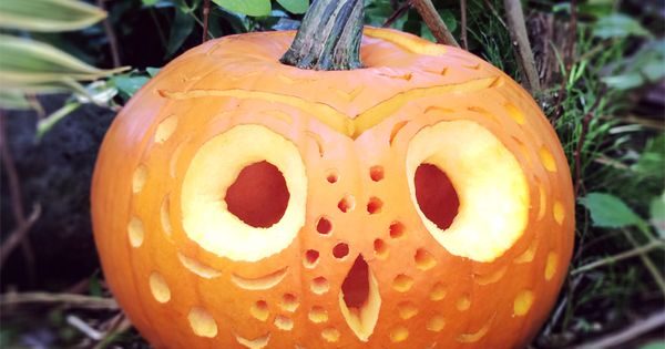 LovelyClusters Owl Pumpkin on instagram  DIYs  Pinterest ...