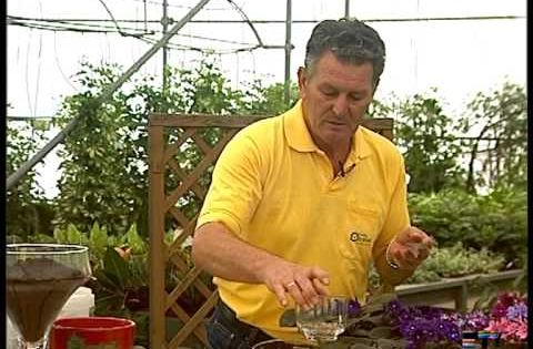 El jardinero en casa la violeta africana el cuidado de - El jardinero en casa ...