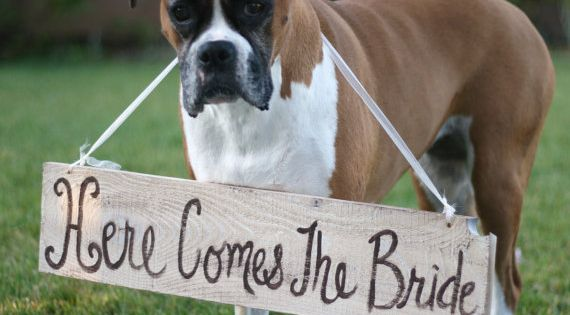 "The cutest ""Here comes the bride"" announcement we've ever seen."