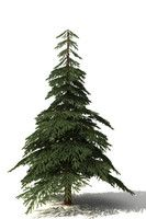 Tree 3d Models Tree Fir Tree 3d Model