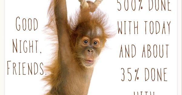 Cute night monkey - photo#12