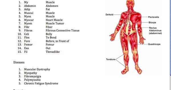 Easy Medical Terminology New Muscular System Reference