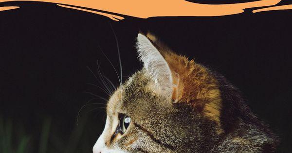 Was Schenkst Du Deiner Katze Zu Weihnachten In Unserem Grossen Gift Guide Verraten Wir Dir Tolle Geschenkideen Mit Denen Du Katzen Hundehaltung Katzen Fakten