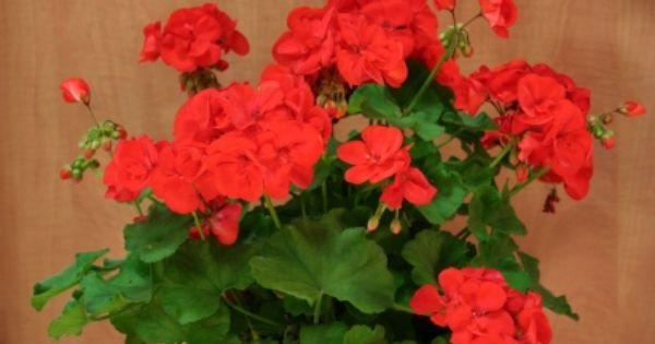 Plantas resistentes al sol plantas resistentes - Plantas resistentes al sol ...