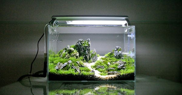 Click this image to show the full size version aquarium for The fish 95 5