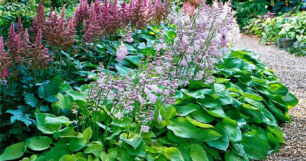 Shaded Garden Ideas Australia