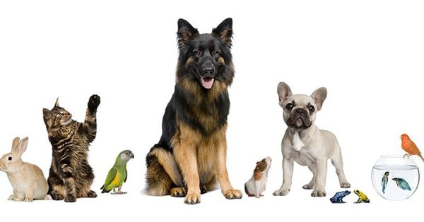 Home Sweet Home Pet Sitting Chandler Tempe And Ahwatukee Pet