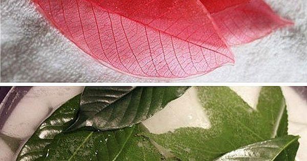Comment r aliser un objet d co avec des feuilles d 39 arbre d co comment et transformers - Objets recuperes et transformes ...